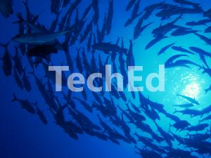 微软 TechEd 2013 主题演讲